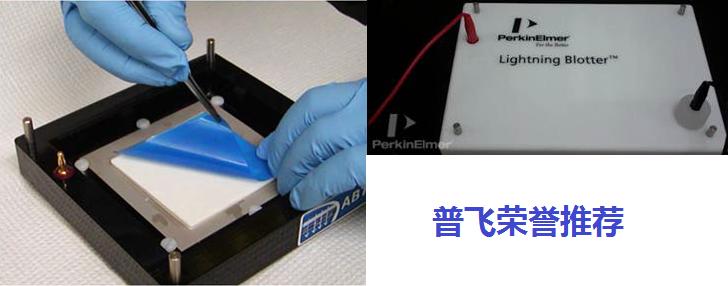 Lightning Blotter Midi Transfer 转膜仪8.5*13.5cm